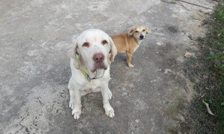 Día Mundial del Perro, un homenaje al mejor amigo que podrás tener